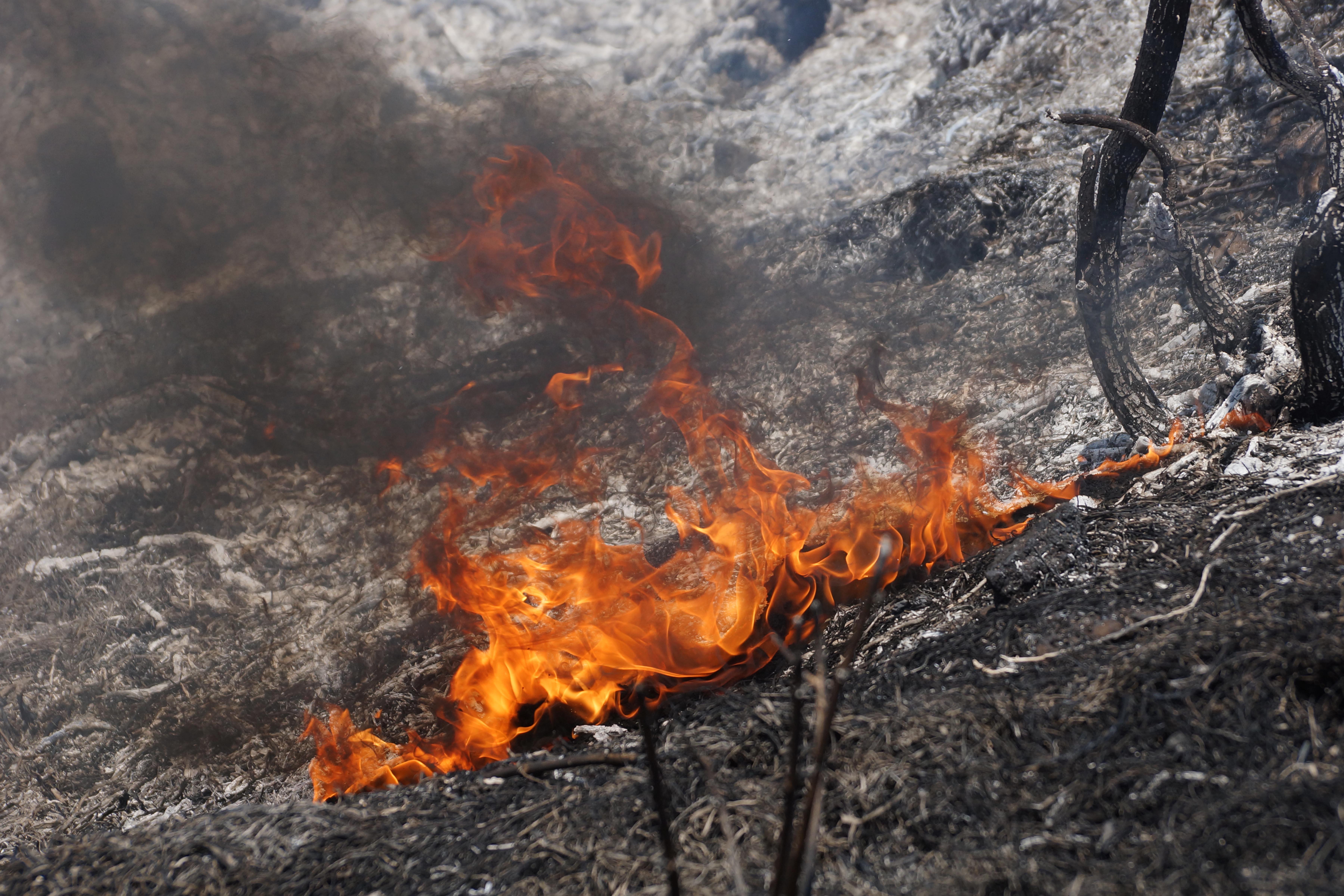 El Comité Nacional para la Defensa y Conservación de Los Chimalapas denunció la presencia de invasores en los bosques de la zona.
