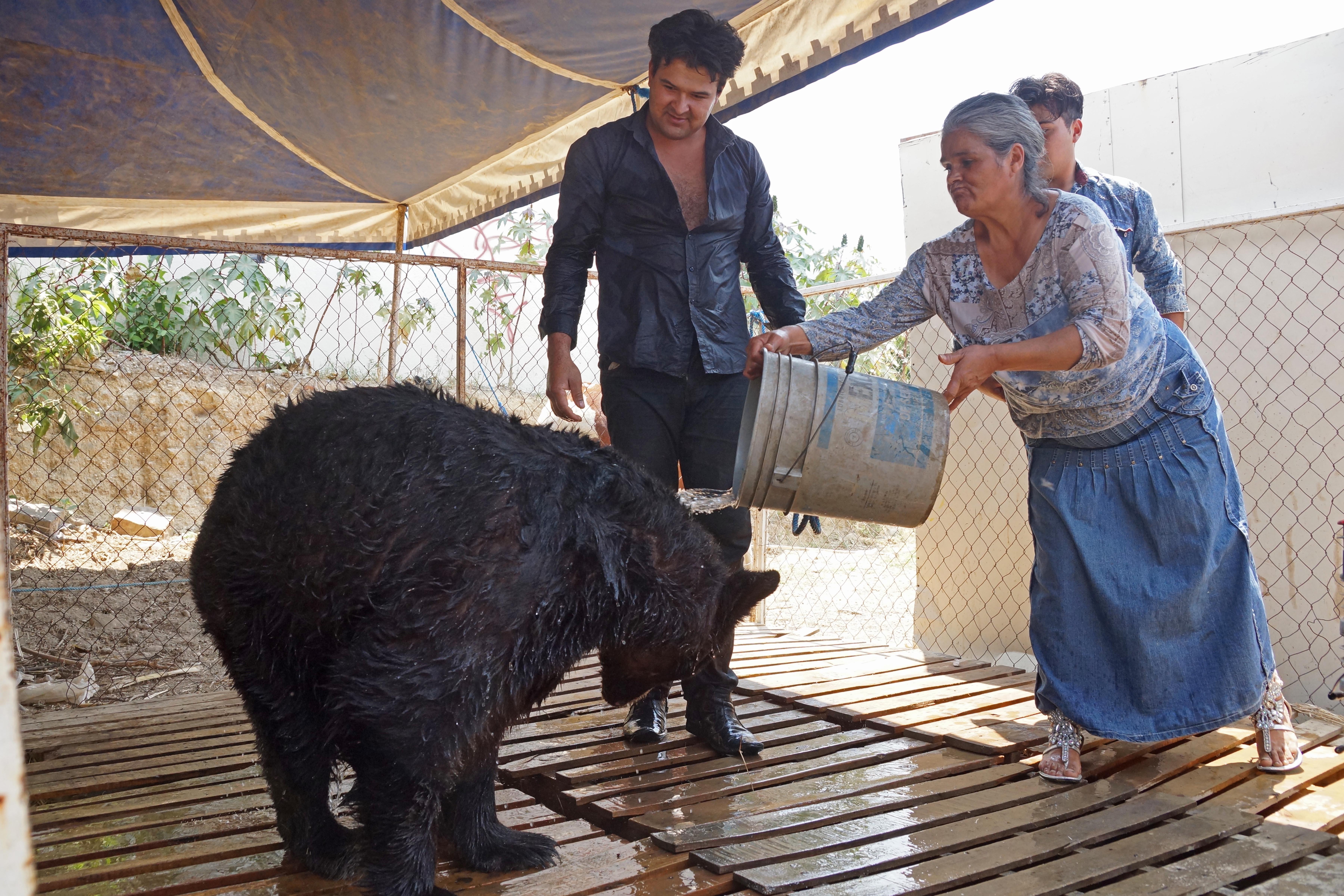 Los animales del circo Ibarra Meraz son parte de la familia.