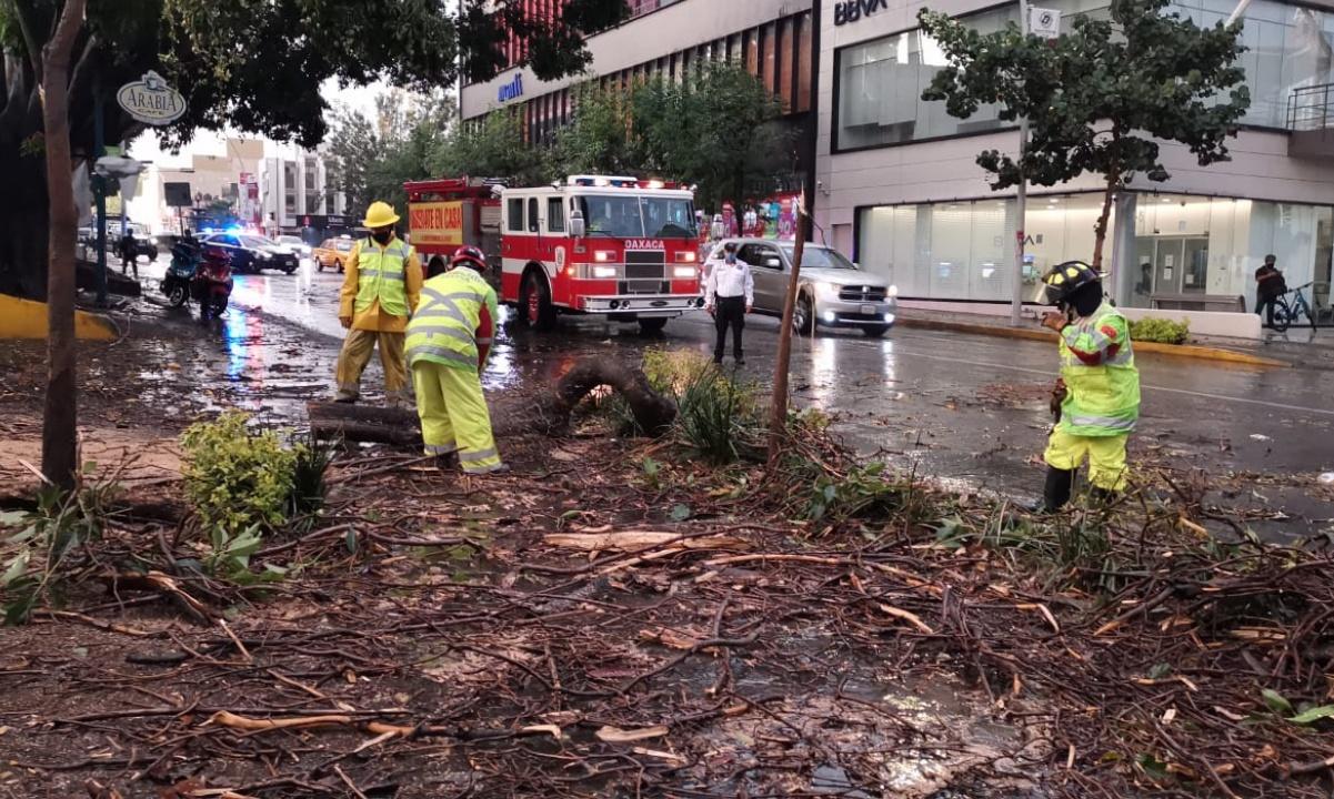 Fuertes lluvias dejan árboles caídos, vialidades obstruidas y daños a viviendas este viernes en capital de Oaxaca