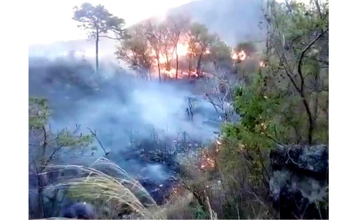 En lo que va del año, suman 150 incendios forestales en Oaxaca