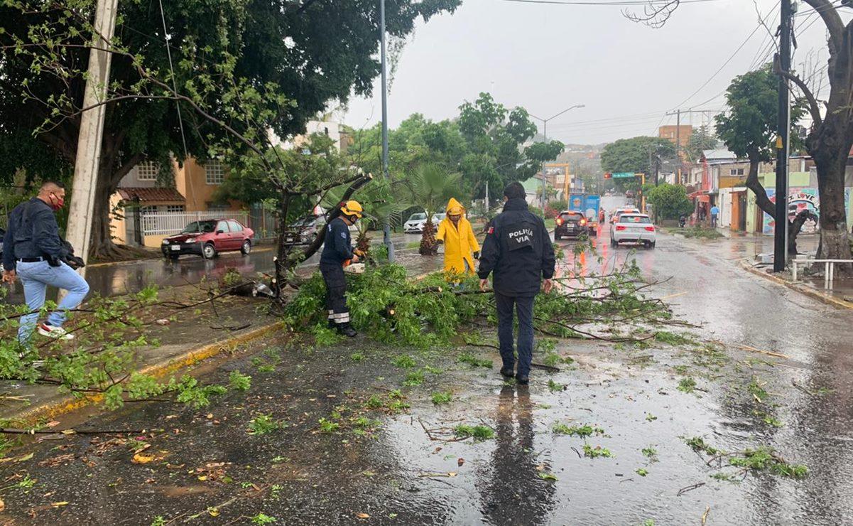 Fuertes lluvias dejan al menos 23 árboles caídos en la capital