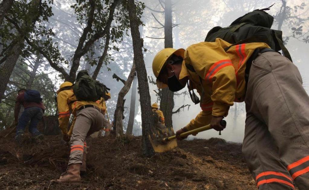 Pandemia contribuye a reducción de incendios forestales en Oaxaca, van 206 en el año