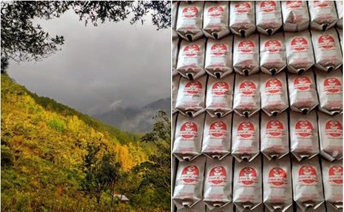 Gracias al café, resiste la economía de Talea de Castro en tiempos de crisis y pandemia