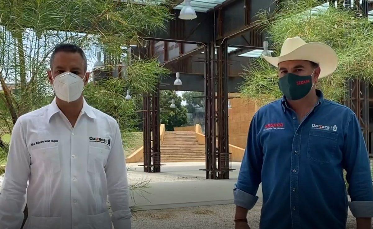 """""""Baratillo Oaxaca"""": Lanzan plataforma para que productores del campo comercialicen en línea"""