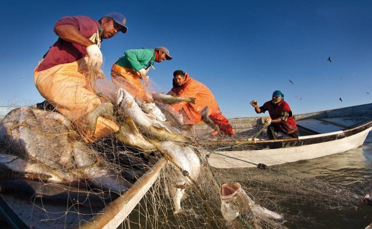 La 4T deja en agonía a la pesca: en 2021 no habrá recursos para programas de fomento ni vigilancia