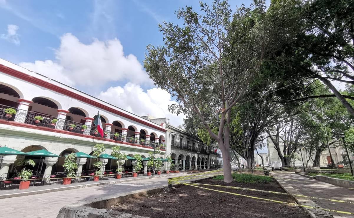 Advierte ambientalista condiciones adversas para Higo del Valle sembrado en el zócalo