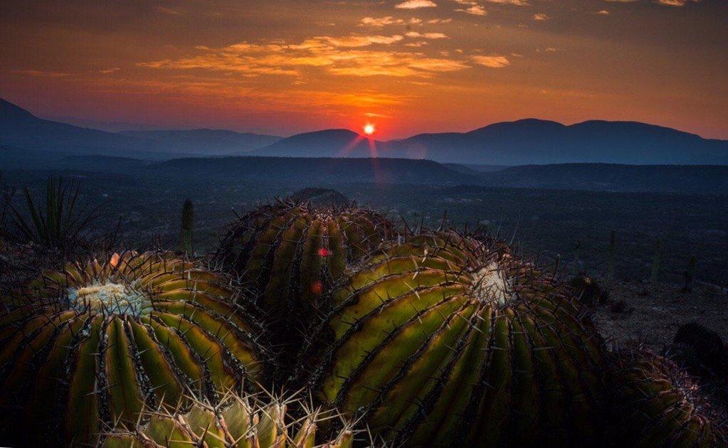 La región árida más biodiversa de América está en Oaxaca