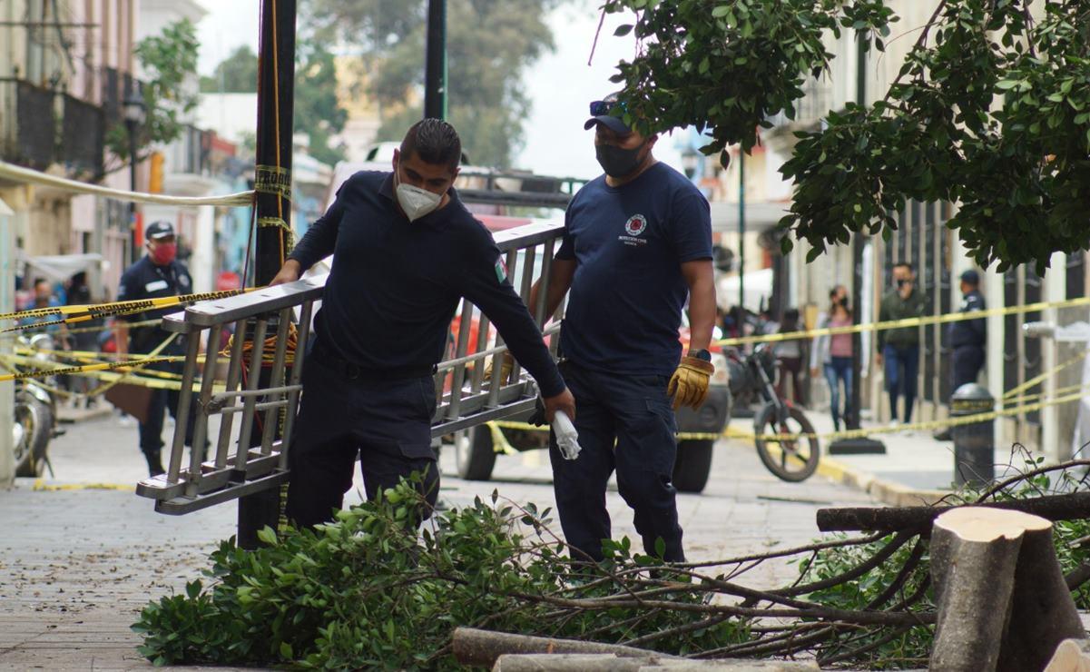 Ambientalistas advierten caída de árboles por sembrar en el zócalo sin estudio de suelo previo