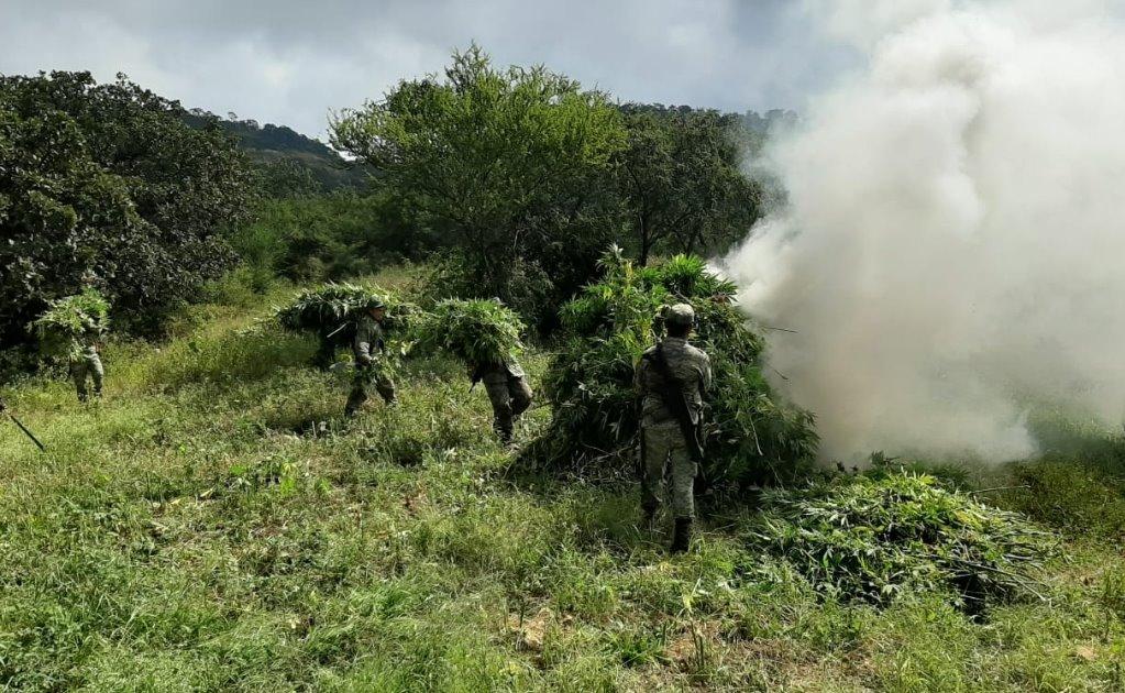 Quema Ejército 74 plantíos de amapola y 156 de marihuana en operativo en la Sierra Sur