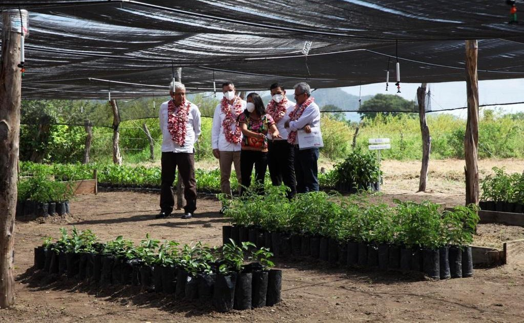 Supervisan AMLO y Murat avance de Sembrando Vida; en Oaxaca cultivarán 18 millones de árboles