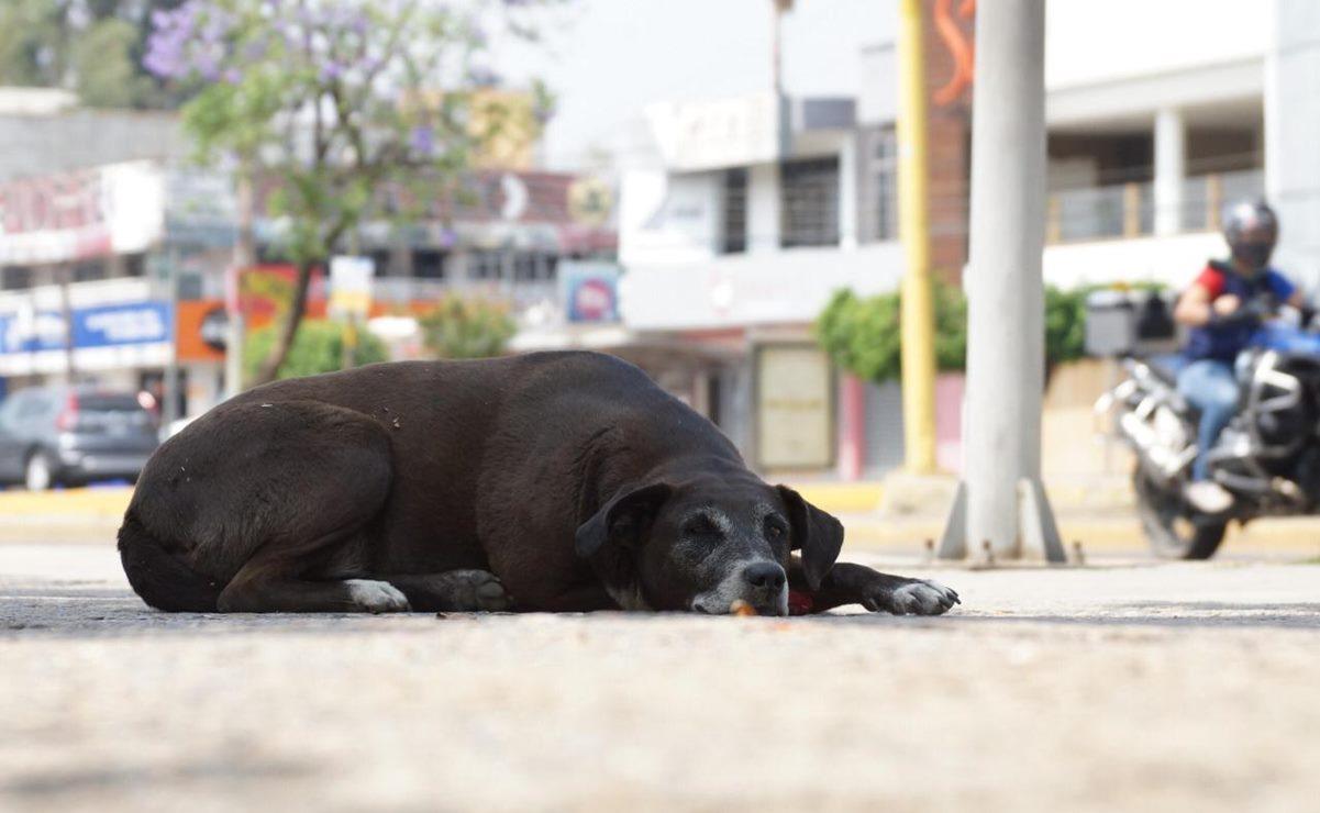 Juzgado especializado en maltrato animal ha atendido 361 denuncias en Oaxaca; 140 durante la pandemia