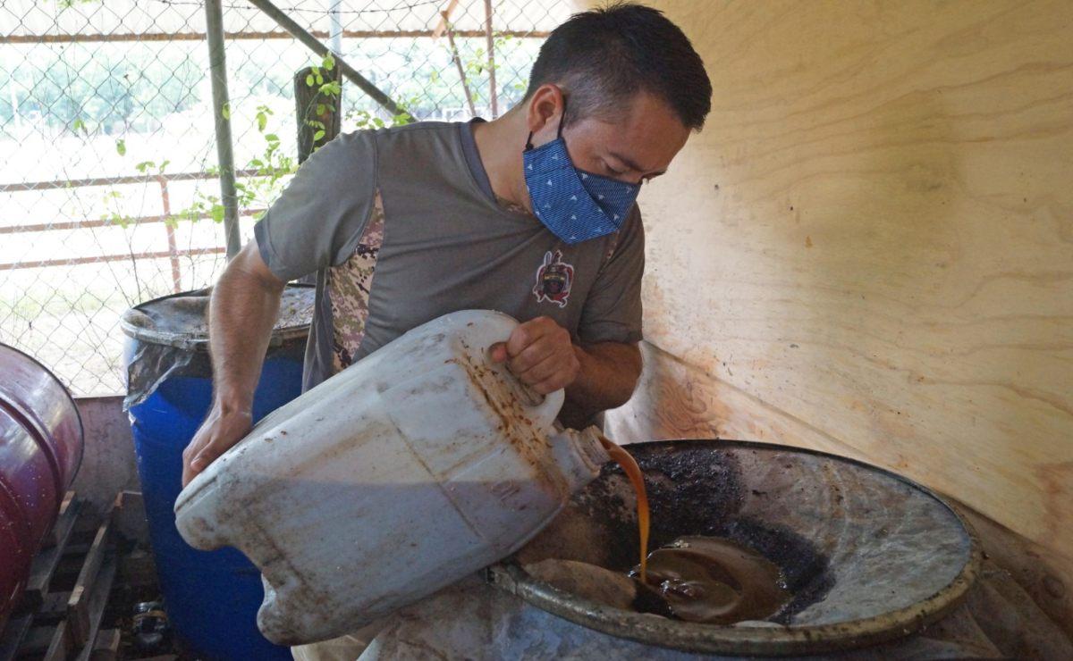Huatulco, único municipio de Oaxaca que crea su biodiesel, reciclando aceite de restaurantes