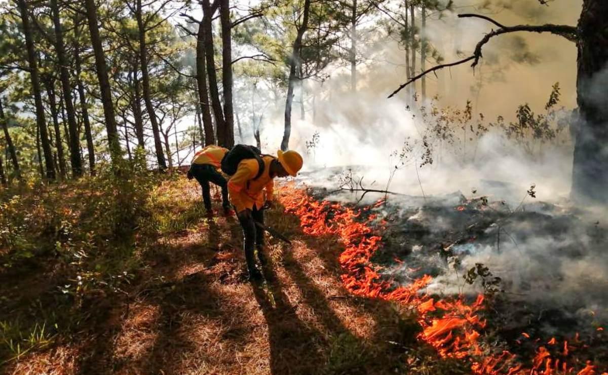 Cumple 48 horas incendio forestal que devora zona norte de la selva de Los Chimalapas