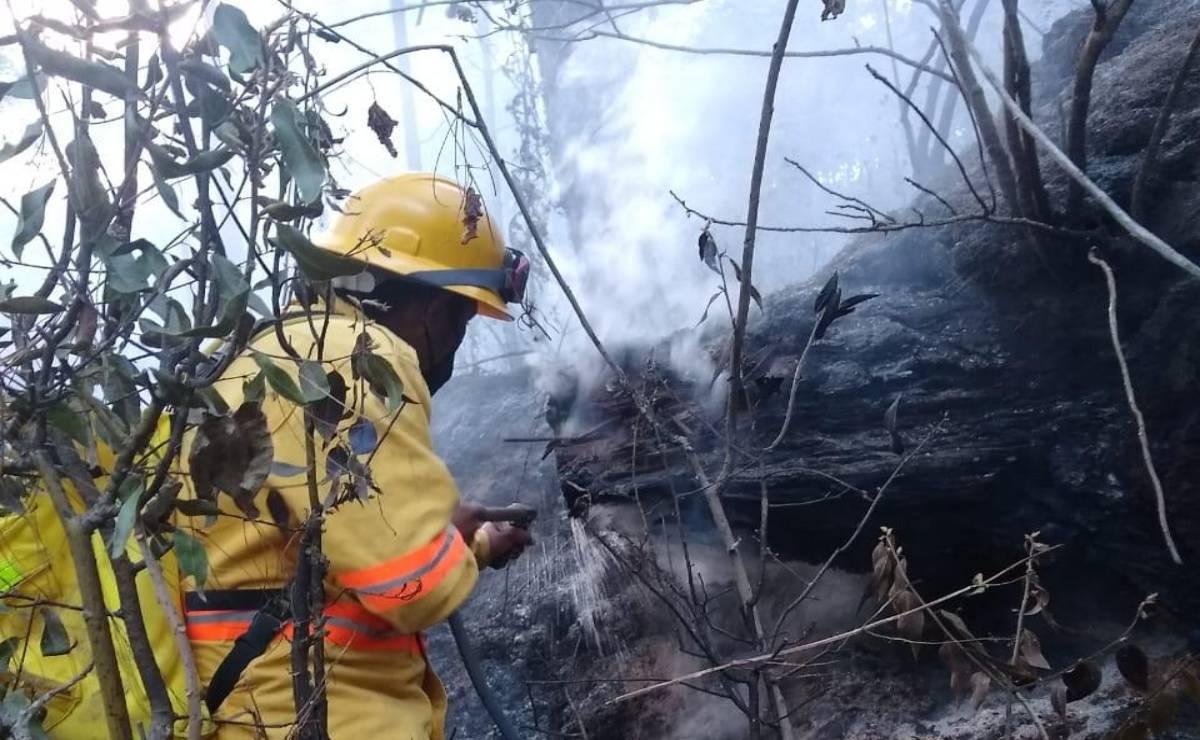 Tras 31 horas, brigadistas de Oaxaca logran sofocar indencio forestal en Yanhutlán
