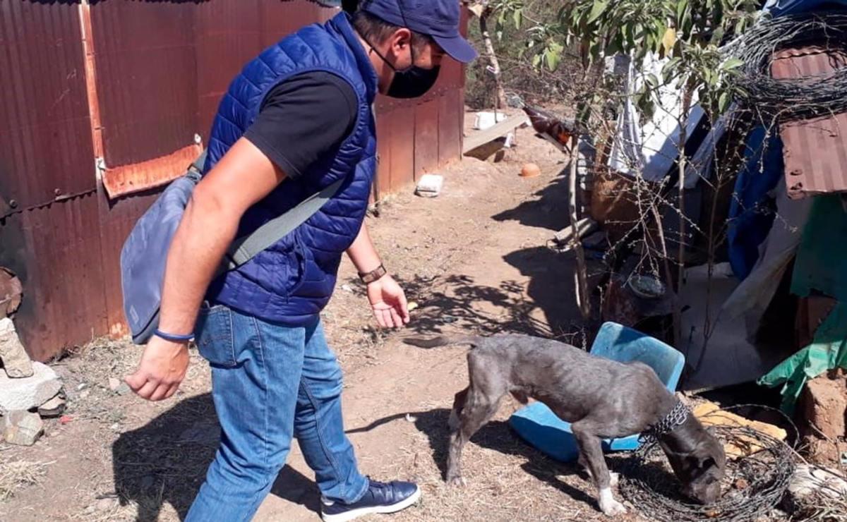 Encuentran una nueva familia para Pulpo, un perrito que sufría maltrato en la capital de Oaxaca