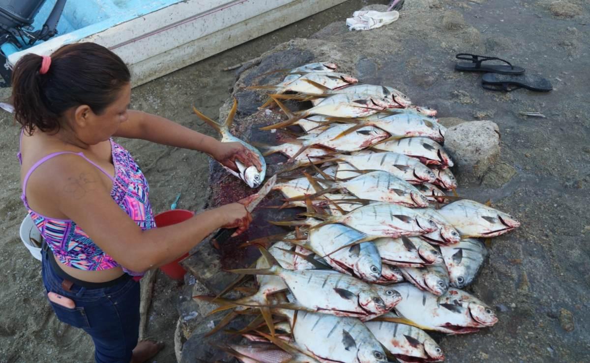 Puerto Ángel, en la Costa de Oaxaca, padece doble castigo: no llega turismo y hay escasez de peces