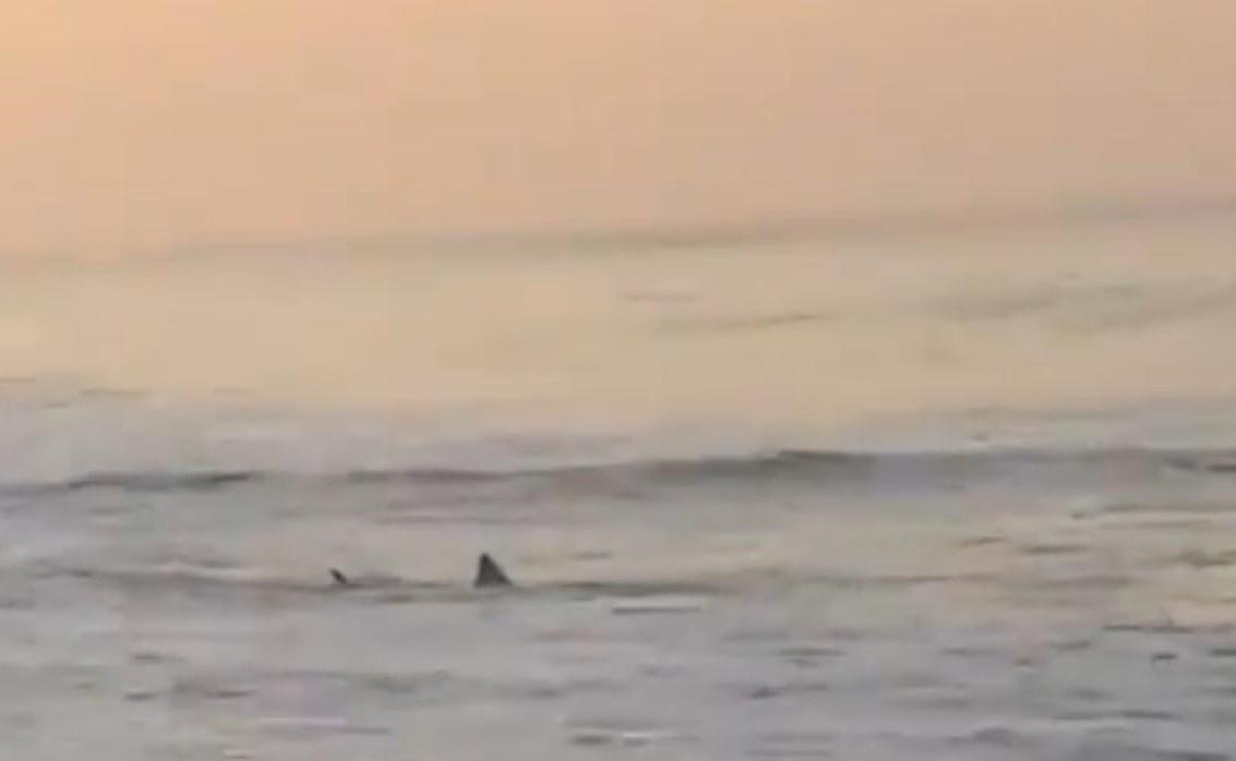Piden precauciones a turistas  por reporte de avistamiento de tiburones en playa de Oaxaca
