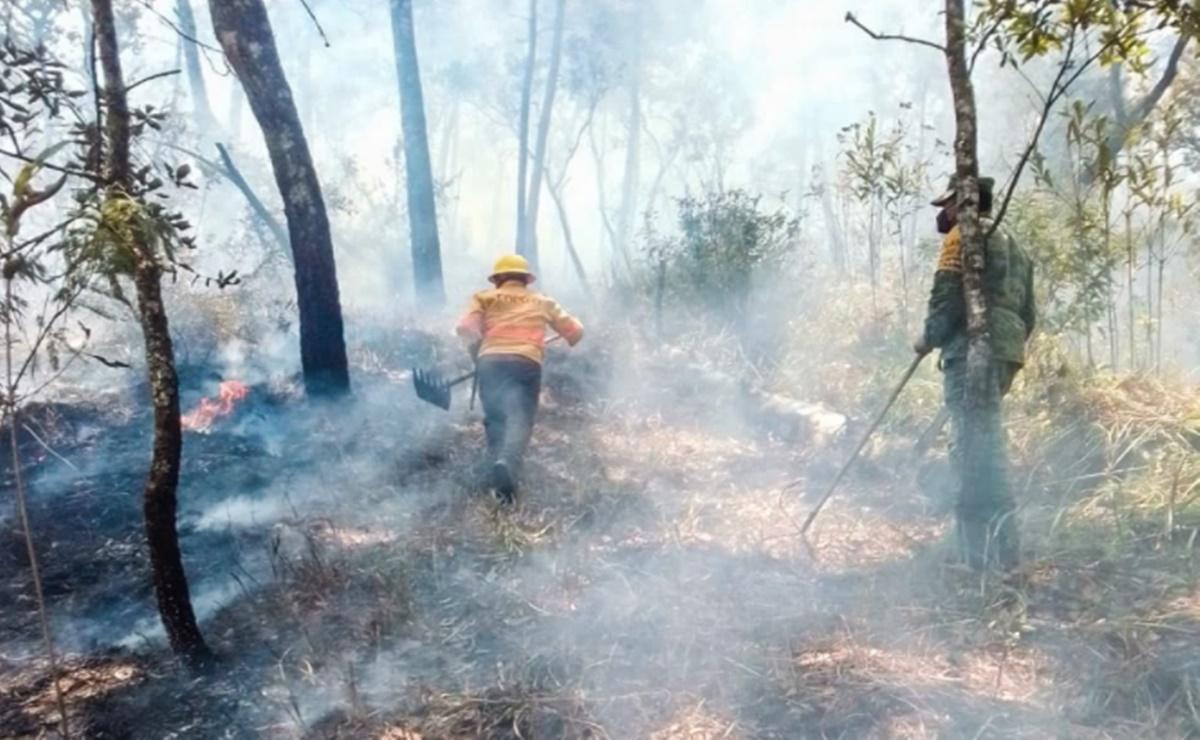 Hay cuatro incendios forestales activos en Oaxaca; Segego participa para acceder a comunidades