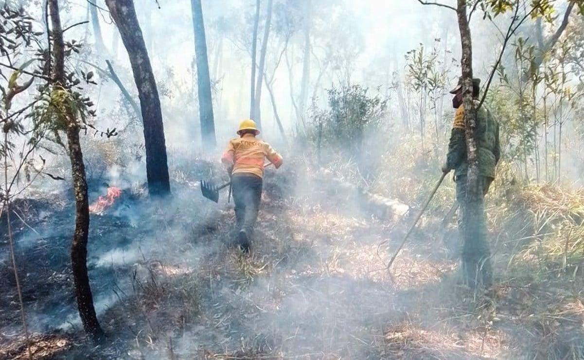 Incendio forestal deja a casi 3 mil personas sin electricidad y daños a cultivos de café y maíz en la Costa de Oaxaca
