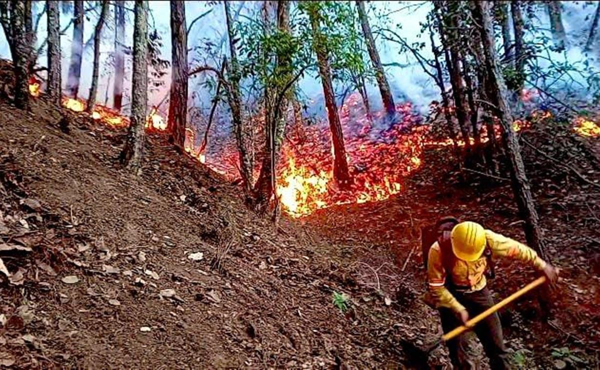 Arden bosques de Oaxaca: Combaten comuneros y brigadistas 6 incendios forestales activos