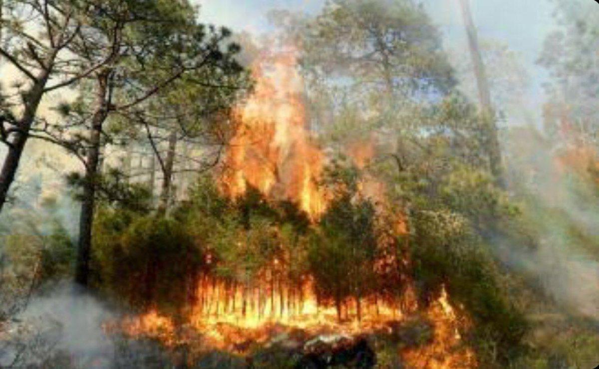 Incendios forestales amenazan la Mixteca de Oaxaca; suman 129 siniestros en bosques en el 2021