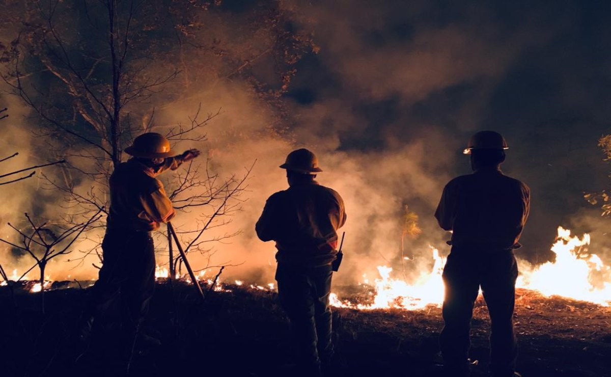 Suben a 132 los incendios forestales registrados en Oaxaca este 2021; hay seis activos