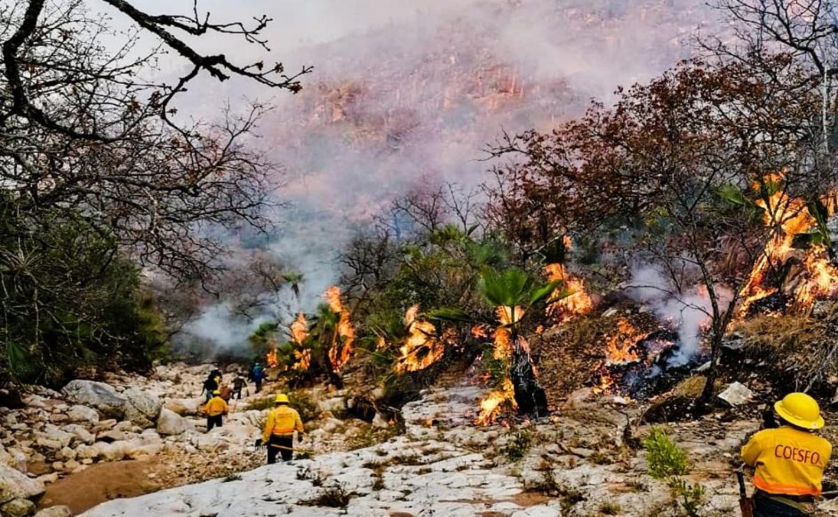 Tras 6 días de combate, liquidan al 100% incendio forestal en Jaltepec, en la Mixteca de Oaxaca