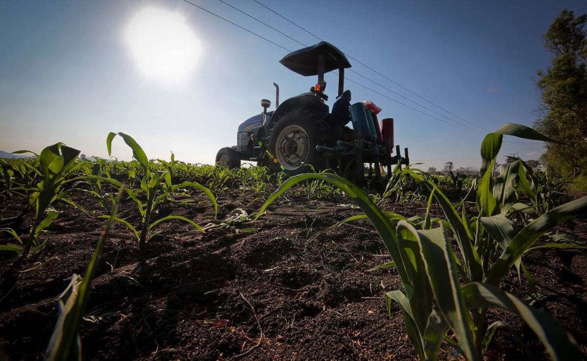 Oaxaca recupera terreno en actividades económicas primarias y secundarias, como agricultura y construcción: Inegi