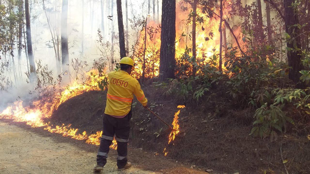 Incendios forestales en Oaxaca han afectado 24 mil hectáreas de bosques este año, 8 mil más que en 2020