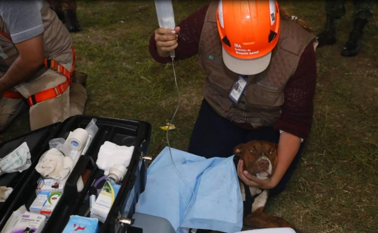 Rescatan a Spay y Spike, los dos perros que cayeron al socavón de Puebla