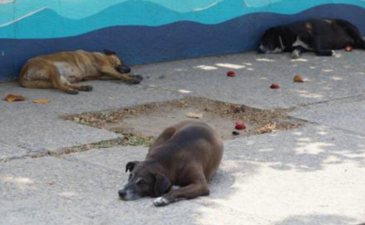 Fiscalía de Oaxaca investiga el envenenamiento y muerte de ocho perros en Zimatlán