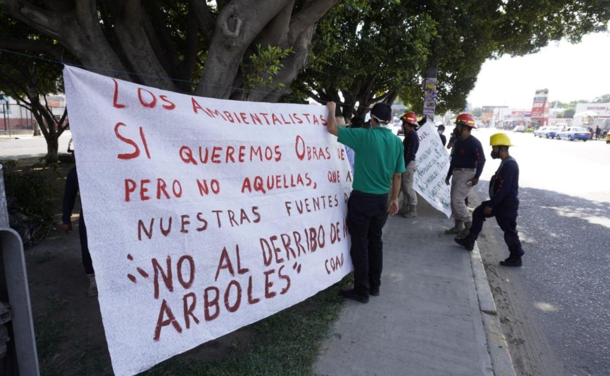 """Ambientalistas de Oaxaca protestan de nuevo contra tala de árboles por obra: """"no estamos contra el desarrollo"""""""