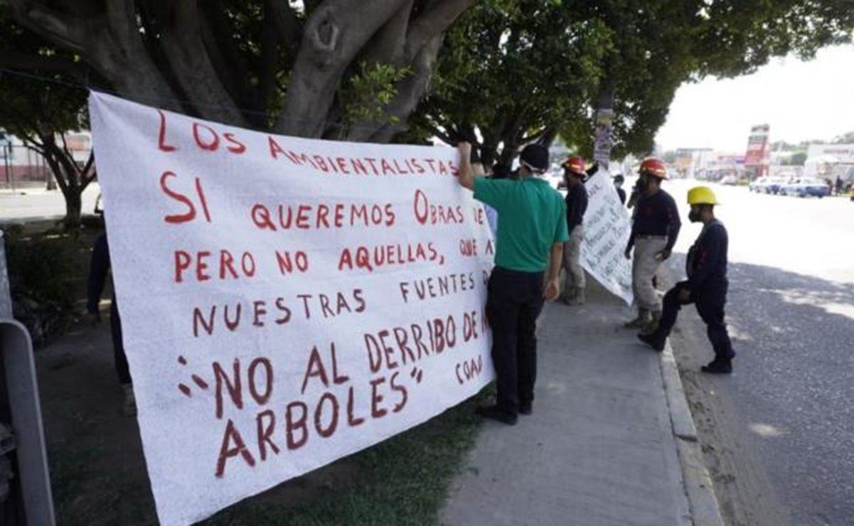 Talarán 523 árboles por obras en Símbolos Patrios, ciudad de Oaxaca; se plantarán mil 605 más: Sinfra