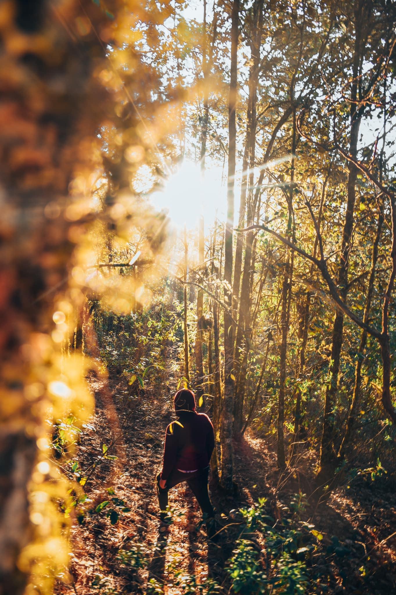 San José del Pacífico, Oaxaca, el bosque mágico de los Duendes y de las Hadas