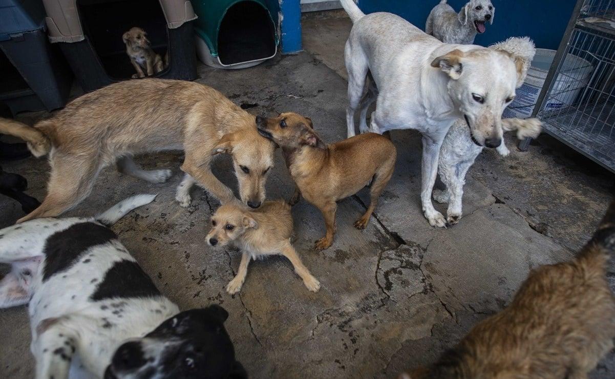 Denuncian nuevo caso de zoofilia en Oaxaca, captan en video a hombre violando a un perro en Tuxtepec