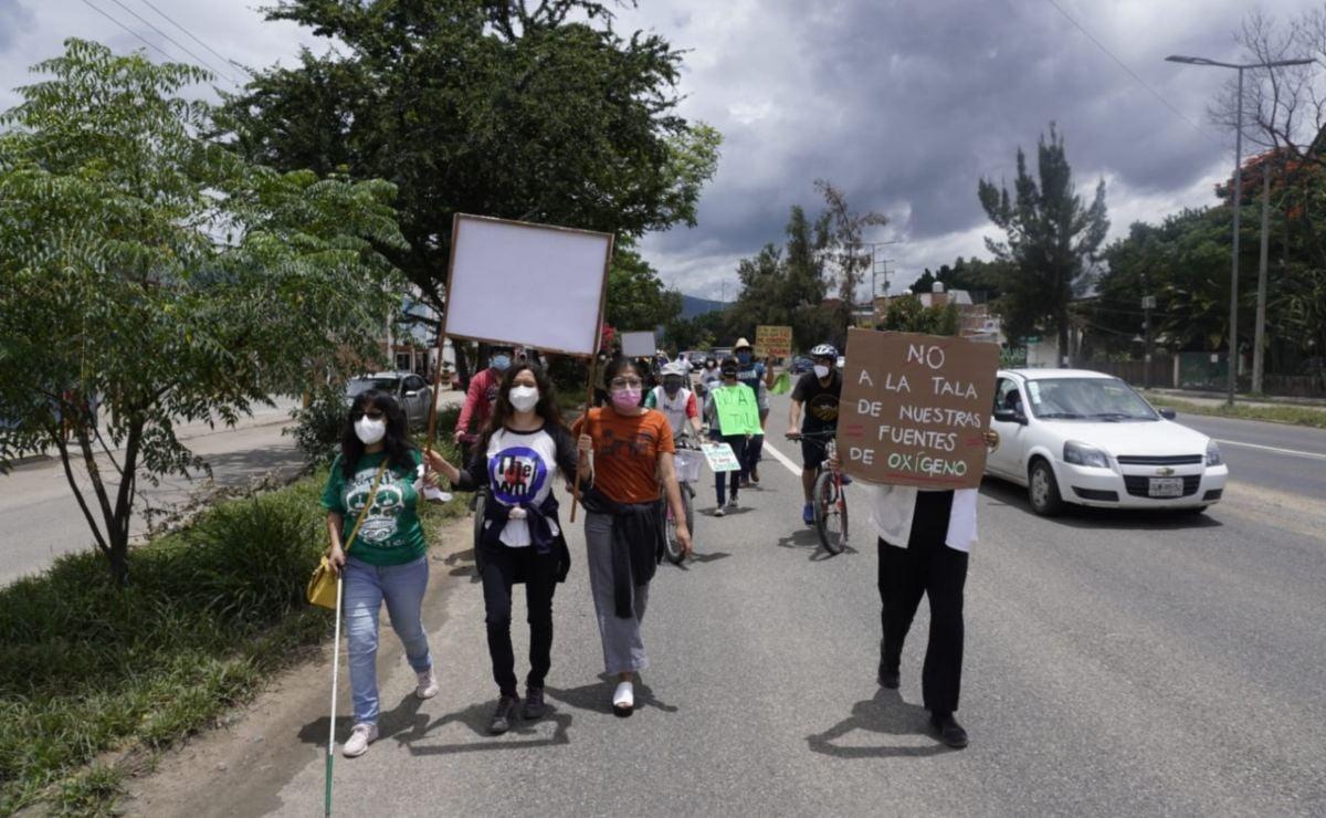 Juez ordena detener la tala de mil 500 árboles en obra de ampliación de Símbolos Patrios, Oaxaca