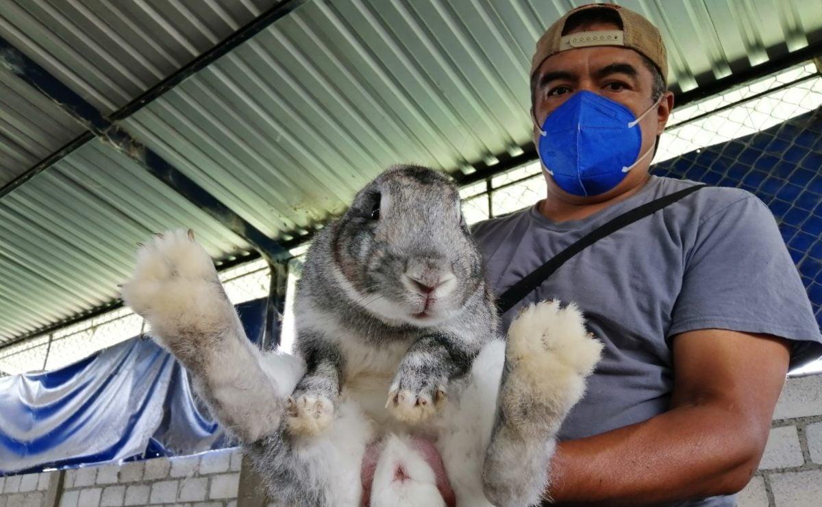 La Bolita, una granja en los Valles de Oaxaca que resiste la crisis gracias a la crianza de conejos