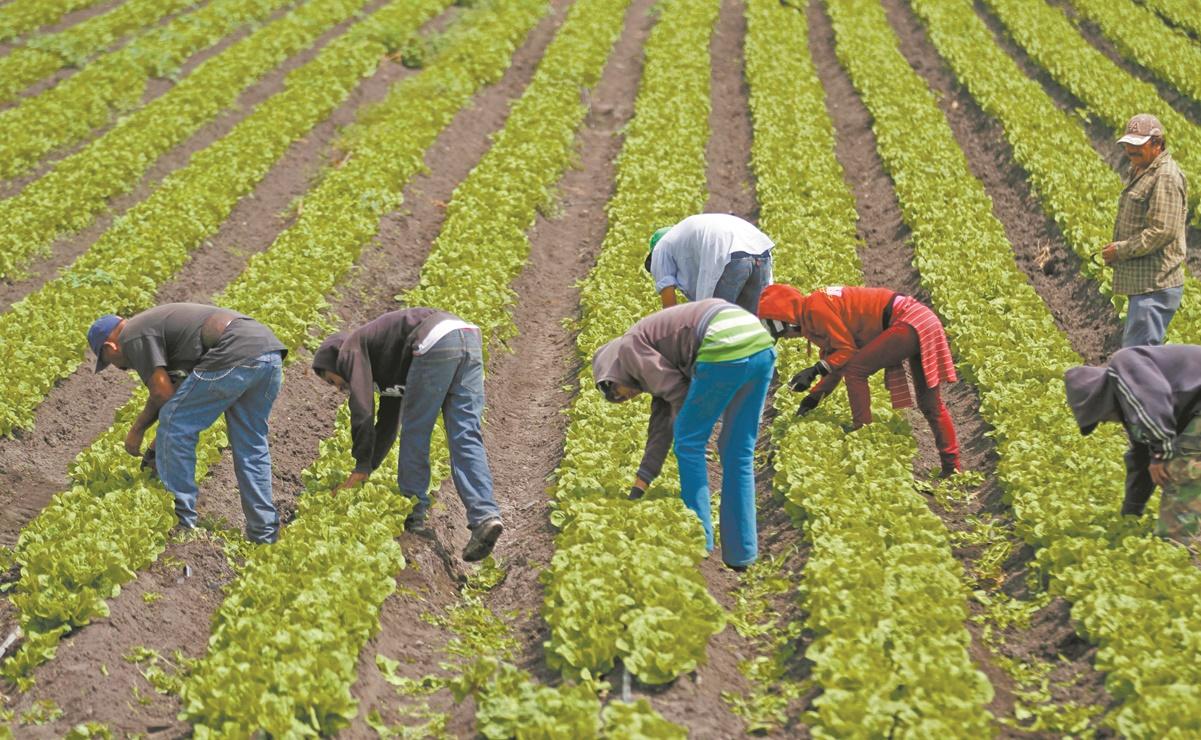 Oaxaca prohíbe uso y distribución de glifosato en cultivos, como forma de protección al ambiente
