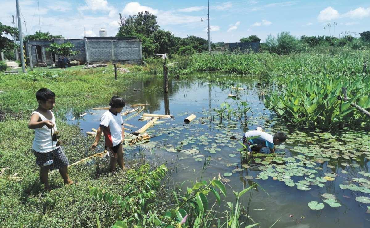 Mancha urbana y saqueo llevan a la extinción a los nenúfares en Oaxaca, patrimonio natural de los zapotecos