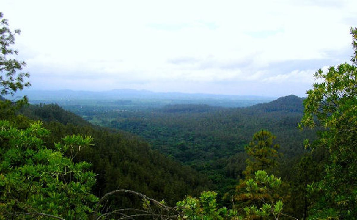 Ambientalistas de Oaxaca acusan a Sinfra de desvirtuar proyecto de conservación de 300 hectáreas