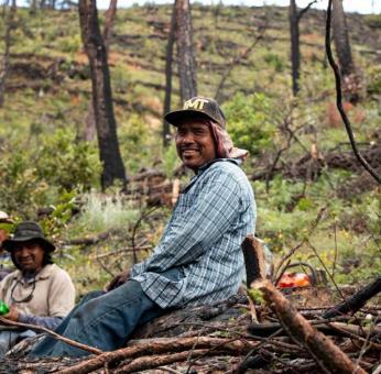Tras incendio que devastó Tepejillo, Oaxaca, comuneros hacen resurgir al bosque de sus cenizas