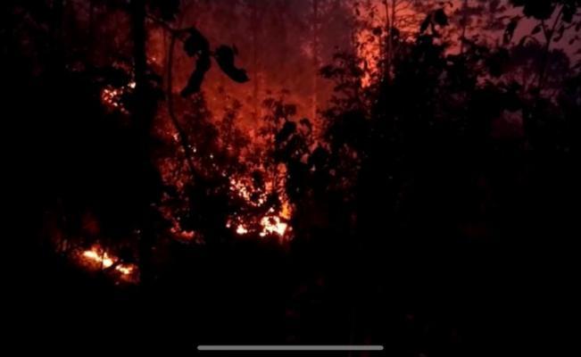 Declaran Emergencia en Ayutla Mixe tras incendio que devastó más de 80 hectáreas de bosque