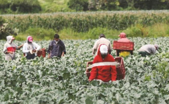 Alertan a oaxaqueños sobre fraudes para visas de trabajo en EU