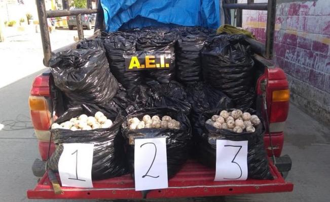 Decomisa Fiscalía 25 mil huevos de tortuga en el Istmo