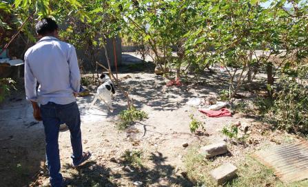 Sacrifican a perro que atacó a bebé en Lachigoló