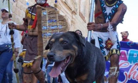 Al perro calendero de Oaxaca también le gustan los carnavales