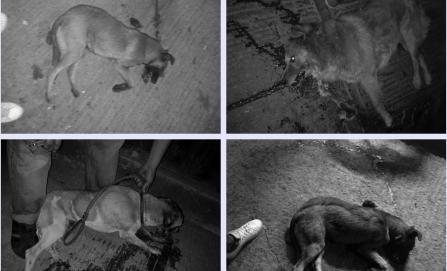 Denuncian envenenamiento de 10 perros en San Juan Chapultepec