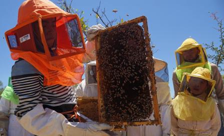 Guardianes de las abejas, niñas y niños producen miel en un internado de Oaxaca