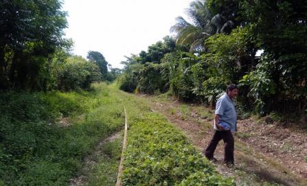 Por rehabilitación de Tren Transístmico de AMLO, 500 familias temen desalojos