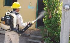 Además de coronavirus, Oaxaca reporta 26 casos de dengue
